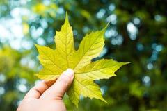 Uma mão que guarda um verde sae Imagens de Stock Royalty Free