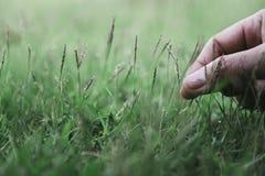 Uma mão que toca e que escolhe na grama em um campo fotografia de stock royalty free