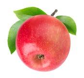 Uma maçã isolada com haste imagem de stock