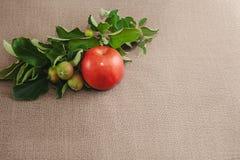 uma maçã vermelha grande e três maçãs verdes verdes no saco foto de stock