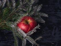 Uma maçã vermelha grande encontra-se em um fundo escuro sob um ramo prata-coberto do abeto vermelho foto de stock