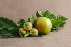 uma maçãs verdes verdes grande e três pequena no fundo do saco Imagem de Stock