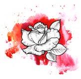 Uma mancha informe vermelha brilhante da aquarela Linha gráfico da flor da tinta de Rosa ilustração do vetor