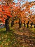 Uma maneira vermelha da caminhada da folha no parque Fotos de Stock