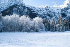 Uma manhã do gelo polar na floresta sob as montanhas imagem de stock