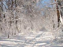 Uma manhã do inverno Foto de Stock