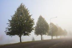 Uma manhã muito nevoenta do outono em Finlandia Foto de Stock