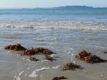 Uma medusa correu encalhado na praia Com a maré imagens de stock