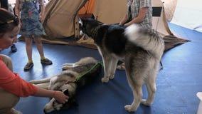 Uma menina afaga um cão que encontra-se no assoalho video estoque