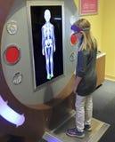 Uma menina aprende sobre o esqueleto no ` s Mus das crianças da descoberta Fotos de Stock Royalty Free