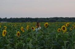 Uma menina com seu cabelo que está no meio de um campo com girassóis foto de stock royalty free