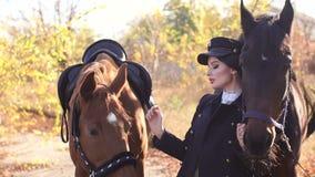 Uma menina conduz dois cavalos bonitos atrás das rédeas nos raios do sol do outono video estoque