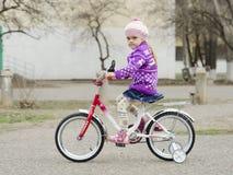 Uma menina da criança de quatro anos vai em uma bicicleta Imagens de Stock