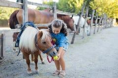 Uma menina de sorriso pequena com cabelo encaracolado vestiu-se nas calças de brim que alimentam um pônei no estábulo foto de stock royalty free