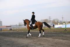 Uma menina em um cavalo Fotografia de Stock