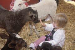 Uma menina em uma pena da cabra em um jardim zoológico de trocas de carícias, montes de Bevery, CA fotografia de stock royalty free