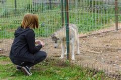 Uma menina está alimentando com um cão em uma gaiola fotos de stock