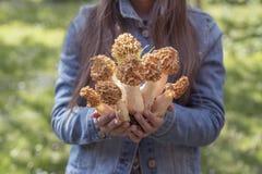 Uma menina está guardando cogumelos comestíveis da mola nas mãos imagem de stock royalty free