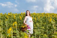 Uma menina grávida no vestido está estando com uma cesta das flores Uma menina está estando com um girassol amarelo no campo W gr fotos de stock