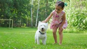 Uma menina joga com um cão engraçado da raça de Terrier branco de montanhas ocidentais em um gramado em um parque video estoque
