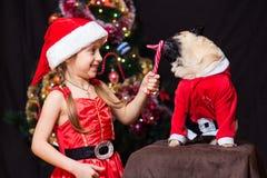 Uma menina no traje de Santa Claus dá um pug para lamber um bastão de doces n Imagem de Stock Royalty Free