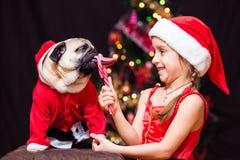Uma menina no traje de Santa Claus dá um pug para lamber um bastão de doces n Imagens de Stock