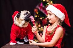 Uma menina no traje de Santa Claus dá um pug para lamber um bastão de doces perto da árvore Fotografia de Stock Royalty Free
