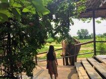 Uma menina que diz o olá! a um elefante em um outsi santuary do elefante foto de stock