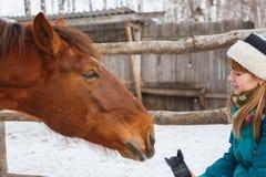 Uma menina quer tomar uma imagem de um cavalo Dirige a lente para o cavalo fotografia de stock royalty free