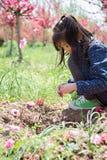 Uma menina sob as flores do pêssego Imagens de Stock Royalty Free