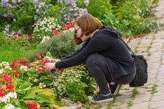 Uma menina toma imagens de flores bonitas em uma cama de flor usando seu telefone Suzdal, Rússia, em setembro de 2017 fotos de stock royalty free