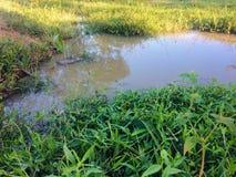 Uma mini lagoa criada com a chuva imagens de stock