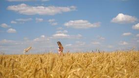Uma moça com cabelo longo anda no campo de trigo vídeos de arquivo