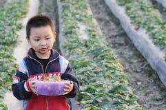 Uma morango da colheita do menino fotografia de stock royalty free