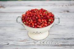 Uma morango deliciosa Bagas maduras Nós recolhemos morangos Imagem de Stock Royalty Free