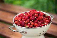 Uma morango deliciosa Bagas maduras Nós recolhemos morangos Fotografia de Stock Royalty Free