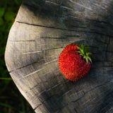 Uma morango em uma superfície de madeira Fotografia de Stock