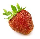 Uma morango vermelha Imagem de Stock