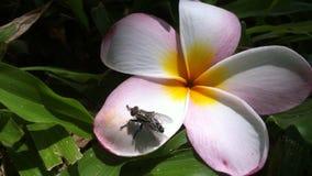 Uma mosca em uma flor Fotografia de Stock