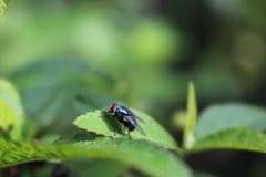 Uma mosca que senta-se em uma planta verde Imagens de Stock