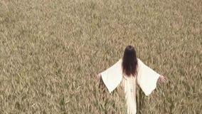 Uma mulher anda o campo de trigo em um vestido branco e guia sua mão ao longo das partes superiores de espigas do trigo vídeos de arquivo