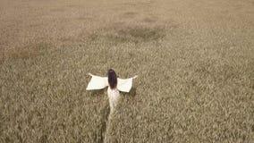 Uma mulher anda o campo de trigo em um vestido branco e guia sua mão ao longo das partes superiores de espigas do trigo filme
