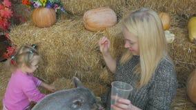 Uma mulher com sua filha pequena está sentando-se no feno e está alimentando-se um porco pequeno com legumes frescos filme