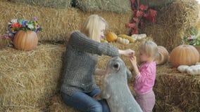 Uma mulher com sua filha pequena está sentando-se no feno e está alimentando-se um porco pequeno com legumes frescos video estoque
