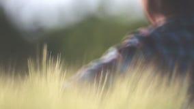 Uma mulher condu-la ceder as orelhas do trigo, close-up, borrão filme