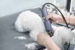 5 Uma mulher corta um cão maltês com uma tosquiadeira elétrica em um salão de beleza animal imagens de stock