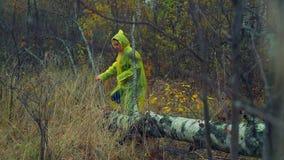 Uma mulher em uma capa de chuva anda com uma floresta e as etapas sobre uma árvore caída video estoque