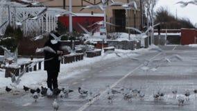 Uma mulher está alimentando gaivota video estoque