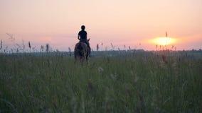 Uma mulher galopa em um cavalo Um atleta monta um cavalo em um campo, galopando vídeos de arquivo