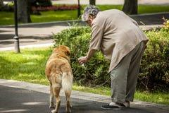 Uma mulher idosa dá a água a seu animal de estimação - um cão em um parque no tempo quente interesses para animais e animais de e Imagem de Stock